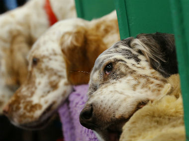 Chinese scientists claimed that dogs originated in southern China some 33,000 years ago. Reuters.