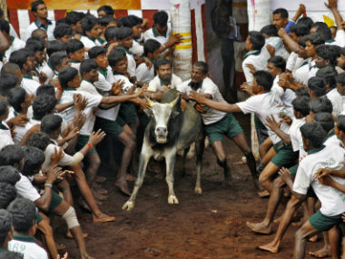 Jallikattu: Supporters organise rally in Chennai for seeking permission to hold bull-taming sport