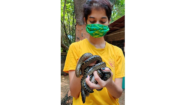 Assistant Curator Ambika with one of the yellow anaconda babies. Photo courtesy Gnaneswar Ch