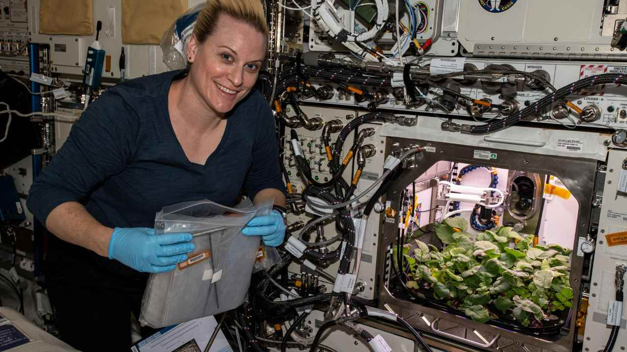 NASA astronaut and Expedition 64 Flight Engineer Kate Rubins checks out radish plants growing for the Plant Habitat-02 experiment that seeks to optimize plant growth in the unique environment of space and evaluate nutrition and taste of the plants. Credits: NASA