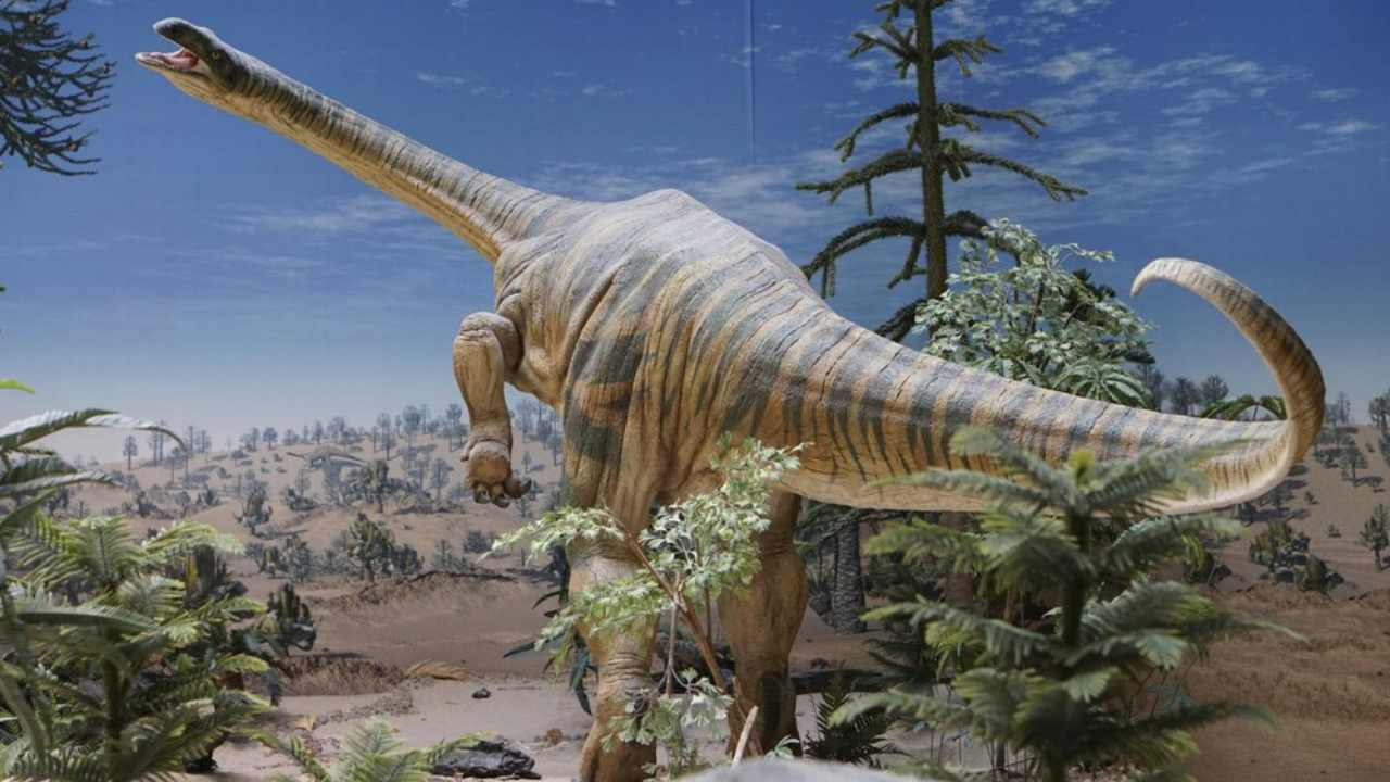 Plateosaurus models at the State Museum of Natural History in Stuttgart, Germany. Image: Randall Irmis/AP