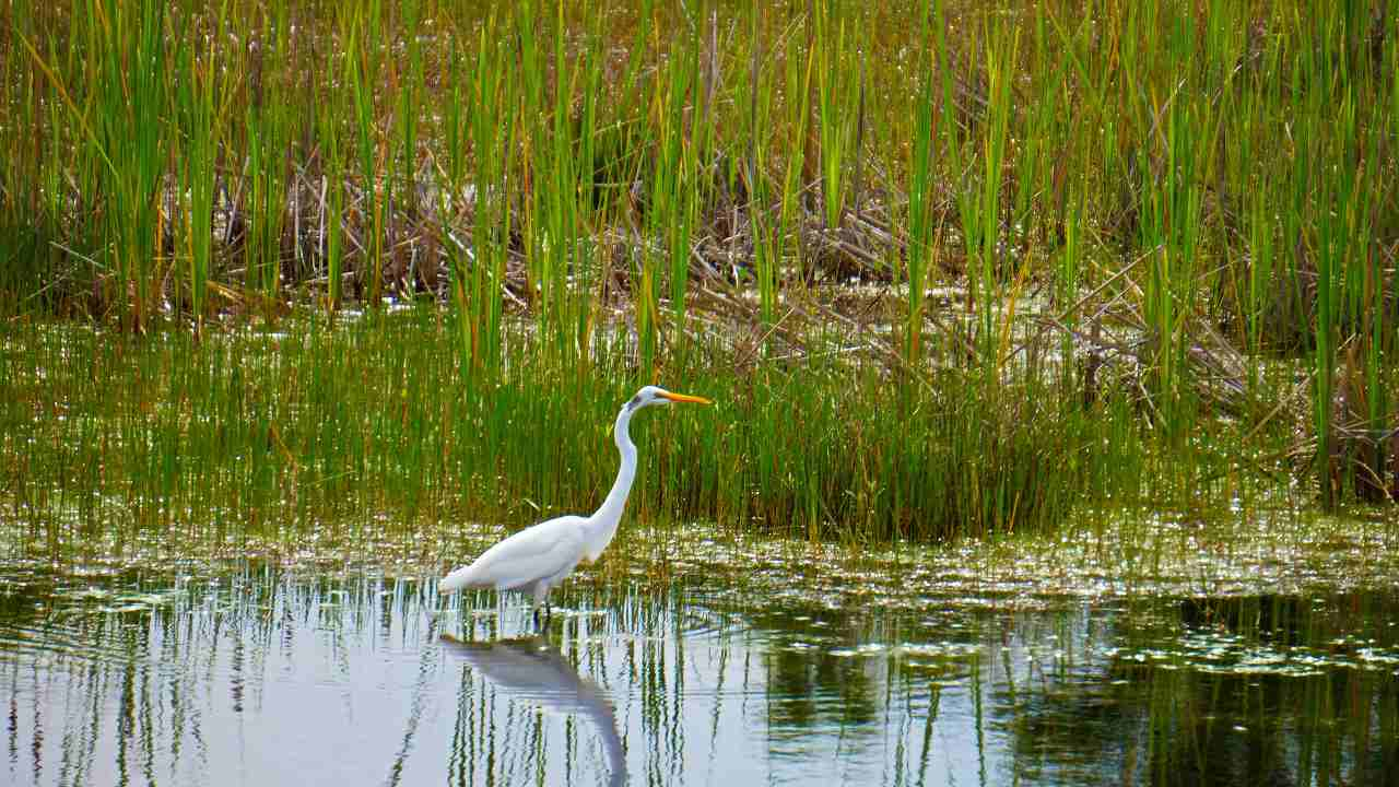 India is home to 42 Ramsar sites –globally-important wetlands for conservation. Image Credit: Rachel C/Unsplash
