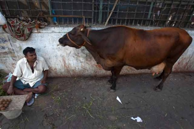 Govt allots Rs 500 cr to protect indigenous cattle br