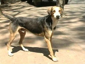 Open letter to a stray dog: We have done more harm than good to your breed, and other animals